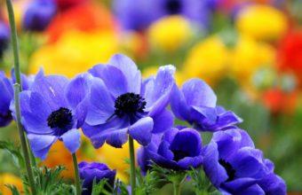 Flowers Summer Nature Colors Macro 1920 x 1200 340x220