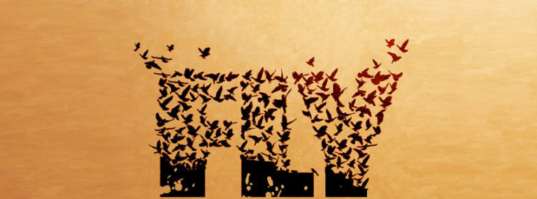 Flying Bird Text Facebook Timeline Cover Wallpaper 850 x 315 768x285
