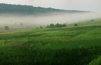 Fog Greens Summer 2560 x 1437 340x220