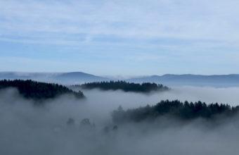 Fog Wallpapers 05 2560 x 1600 340x220
