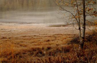 Fog Wallpapers 06 1920 x 1200 340x220
