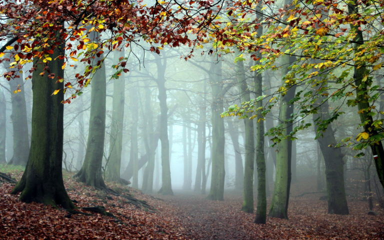 Fog Wallpapers 08 2560 x 1600 768x480