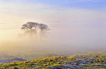 Fog Wallpapers 11 2560 x 1600 340x220