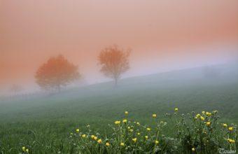 Fog Wallpapers 20 3840 x 2559 340x220