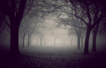 Fog Wallpapers 21 2048 x 1365 340x220