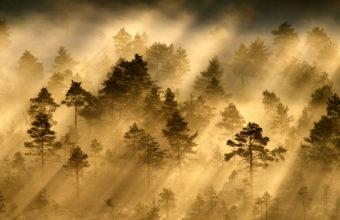 Fog Wallpapers 24 2048 x 1365 340x220