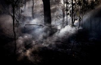 Fog Wallpapers 28 2048 x 1152 340x220