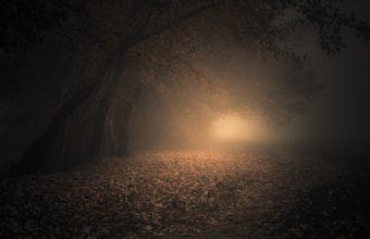 Fog Wallpapers 29 2048 x 1366 340x220