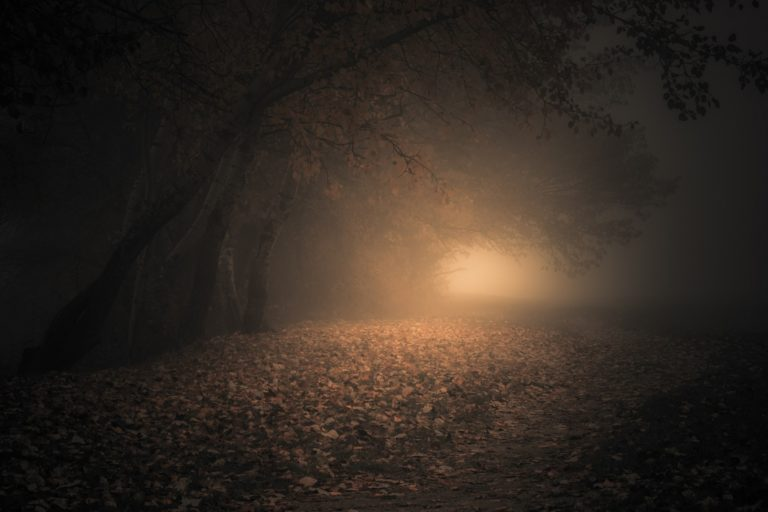 Fog Wallpapers 29 2048 x 1366 768x512