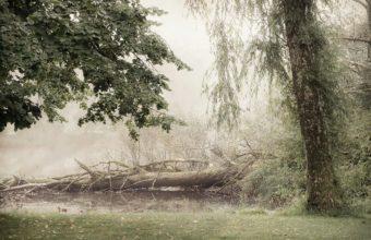 Fog Wallpapers 31 2560 x 1706 340x220