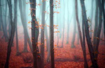 Fog Wallpapers 32 2048 x 1367 340x220