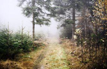 Fog Wallpapers 35 2048 x 1365 340x220