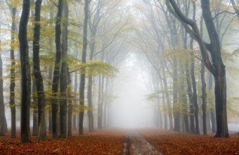 Fog Wallpapers 48 2048 x 1365 340x220