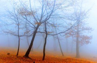 Fog Wallpapers 49 2560 x 1707 340x220