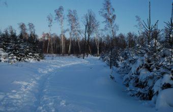 Footpath Winter Birches 1440 x 900 340x220