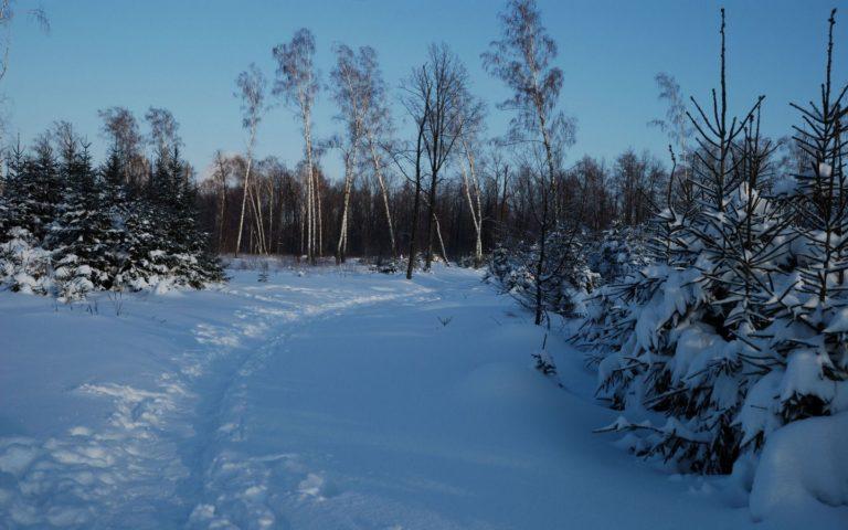 Footpath Winter Birches 1440 x 900 768x480