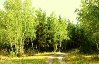 Forest Landscape Summer 3264 x 2400 340x220