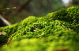 Forest Springtime 2880 x 1800 340x220
