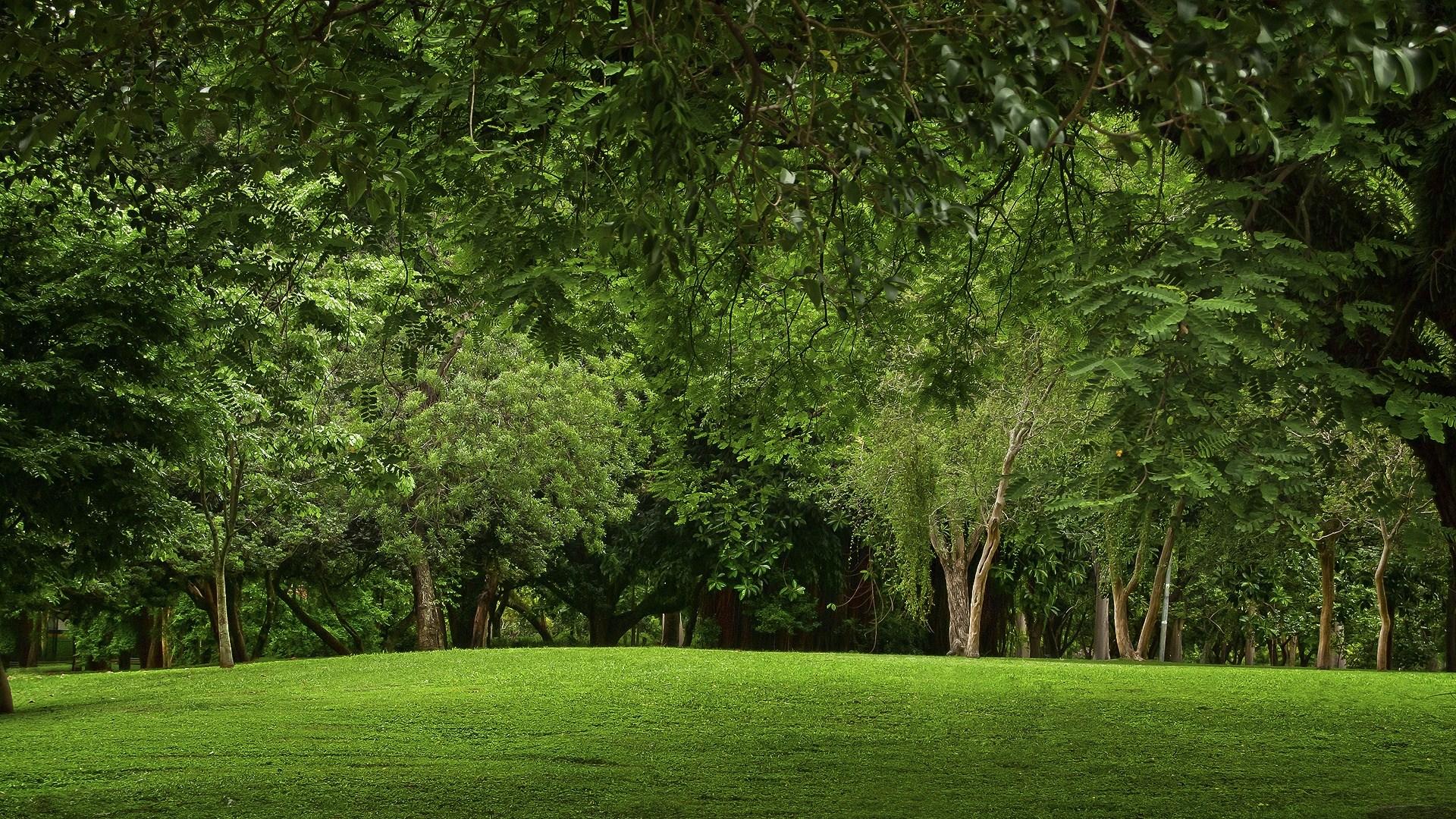 деревья на поляне  № 2050712 бесплатно