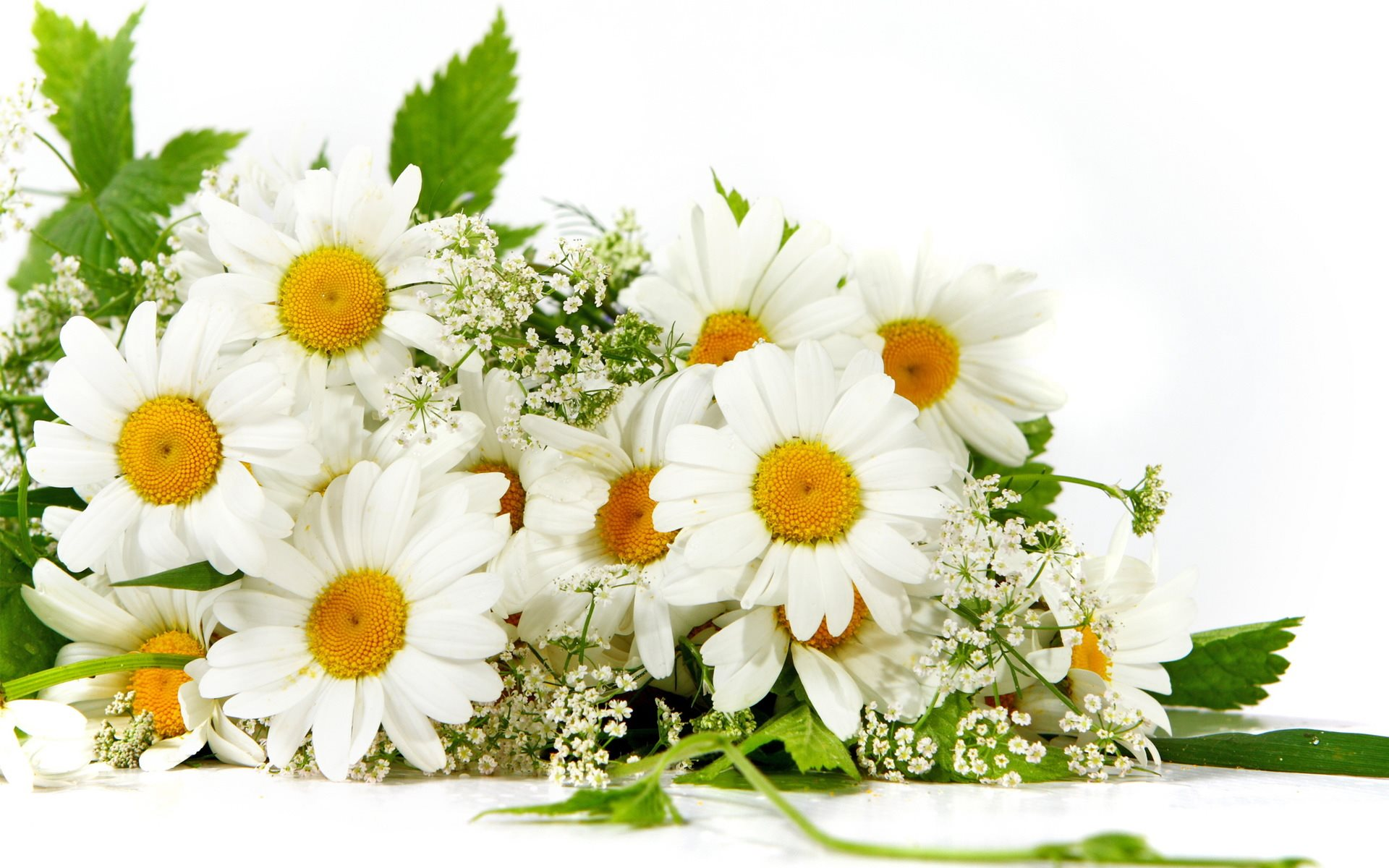 New year flowers- daisies