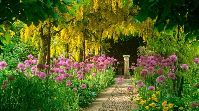 Garden Wallpapers 01 1920 x 1080 768x432