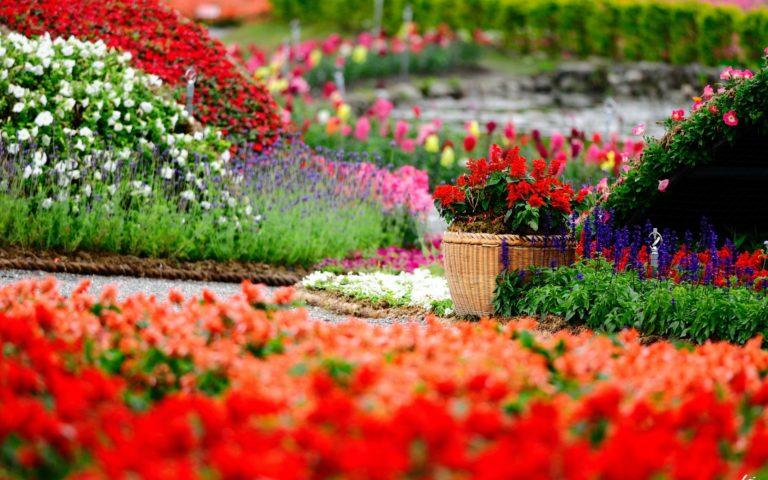 Garden Wallpapers 13 1920 x 1200 768x480