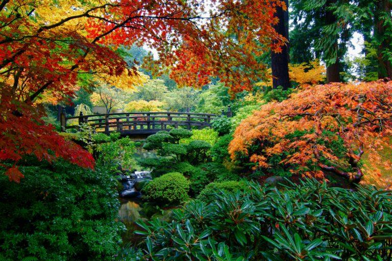 Garden Wallpapers 27 3200 x 2133 768x512