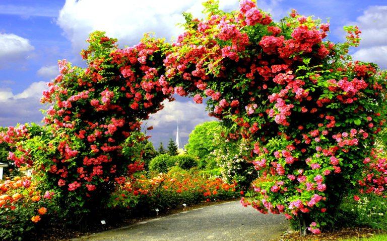 Garden Wallpapers 37 2560 x 1600 768x480
