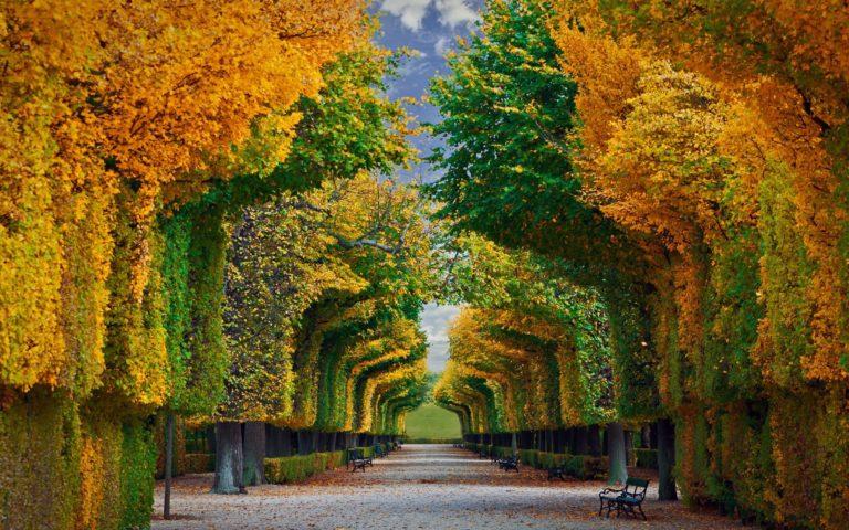 Garden Wallpapers 38 1920 x 1200 768x480