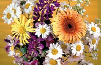 Gerbera Daisies Flowers 1280 x 1024 340x220