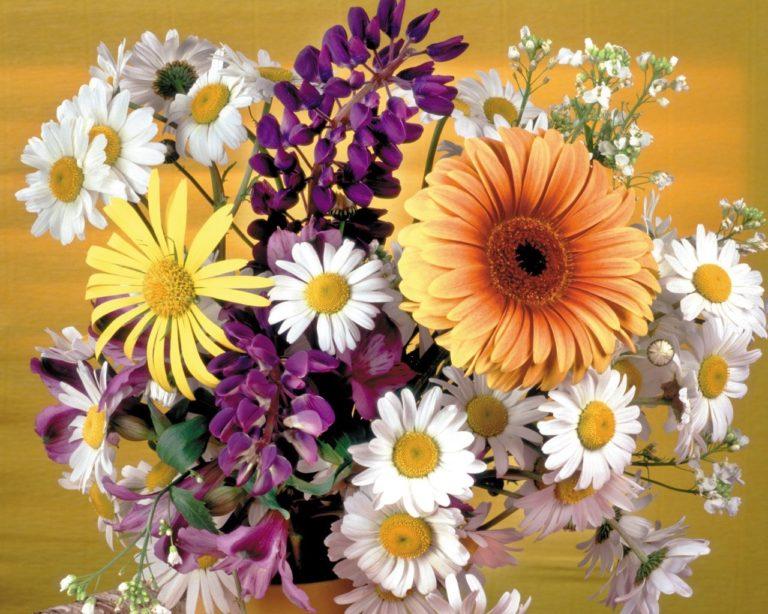 Gerbera Daisies Flowers 1280 x 1024 768x614