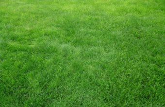 Grain Grass Field 3264 x 2448 340x220