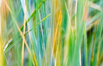 Grass 1920 X 1200 340x220