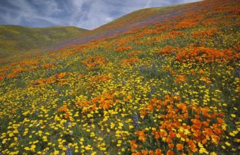 Grass Flowers Summer 1920 x 1080 340x220