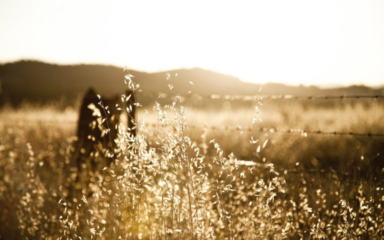 Grass Landscapes Sunset Sunrise 1920 x 1200 768x480