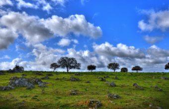 Grass Skyline Summer 1440 x 900 340x220
