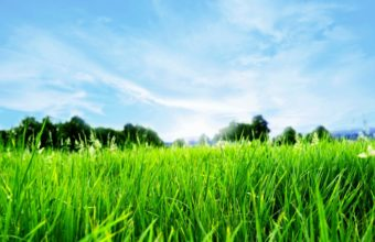 Green Grass HD 2560 x 1600 340x220
