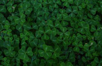 Green Leaf Clover 2560 x 1600 340x220