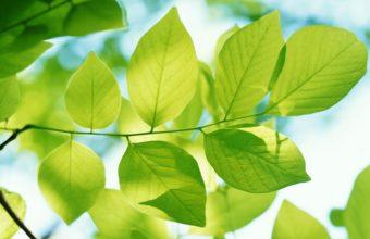 Green Leaves 1920 x 1080 340x220