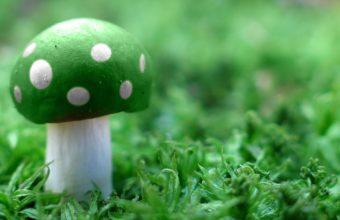 Green Mushroom Wide 1920 x 1200 340x220