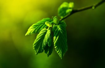 Green Nature Leaves Macro Depth 1920 x 1200 340x220