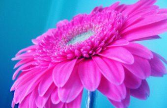 Hot Pink Flower 2560 x 1600 340x220