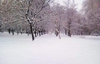 January Winter On Trees 2560 x 1920 1 340x220