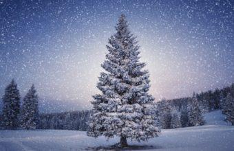 King Tree In Winter 2560 X 1600 340x220