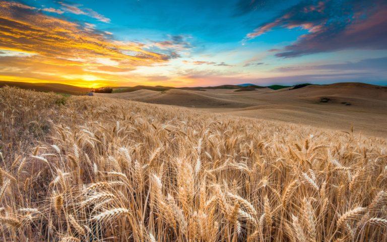 Landscape Field Clouds 2560 x 1600 768x480