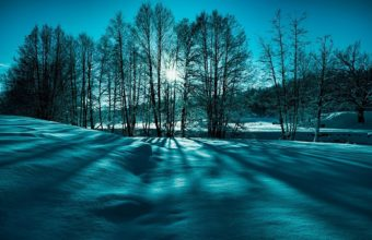 Landscape Snow Trees Winter Nature 1920 x 1200 340x220