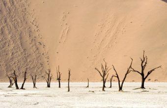 Landscapes Nature Deserts Dead 1600 x 1200 340x220