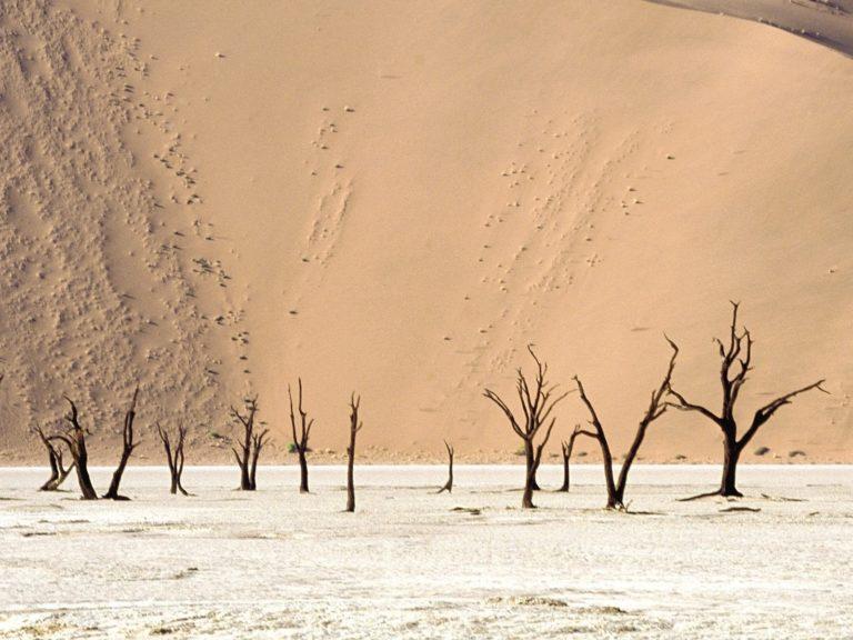 Landscapes Nature Deserts Dead 1600 x 1200 768x576