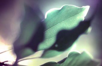 Leaf Closeup 2560 x 1600 340x220