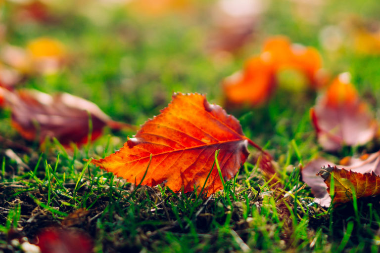 Leaf Leaves Orange Grass Nature Macro 3000 x 2000 768x512